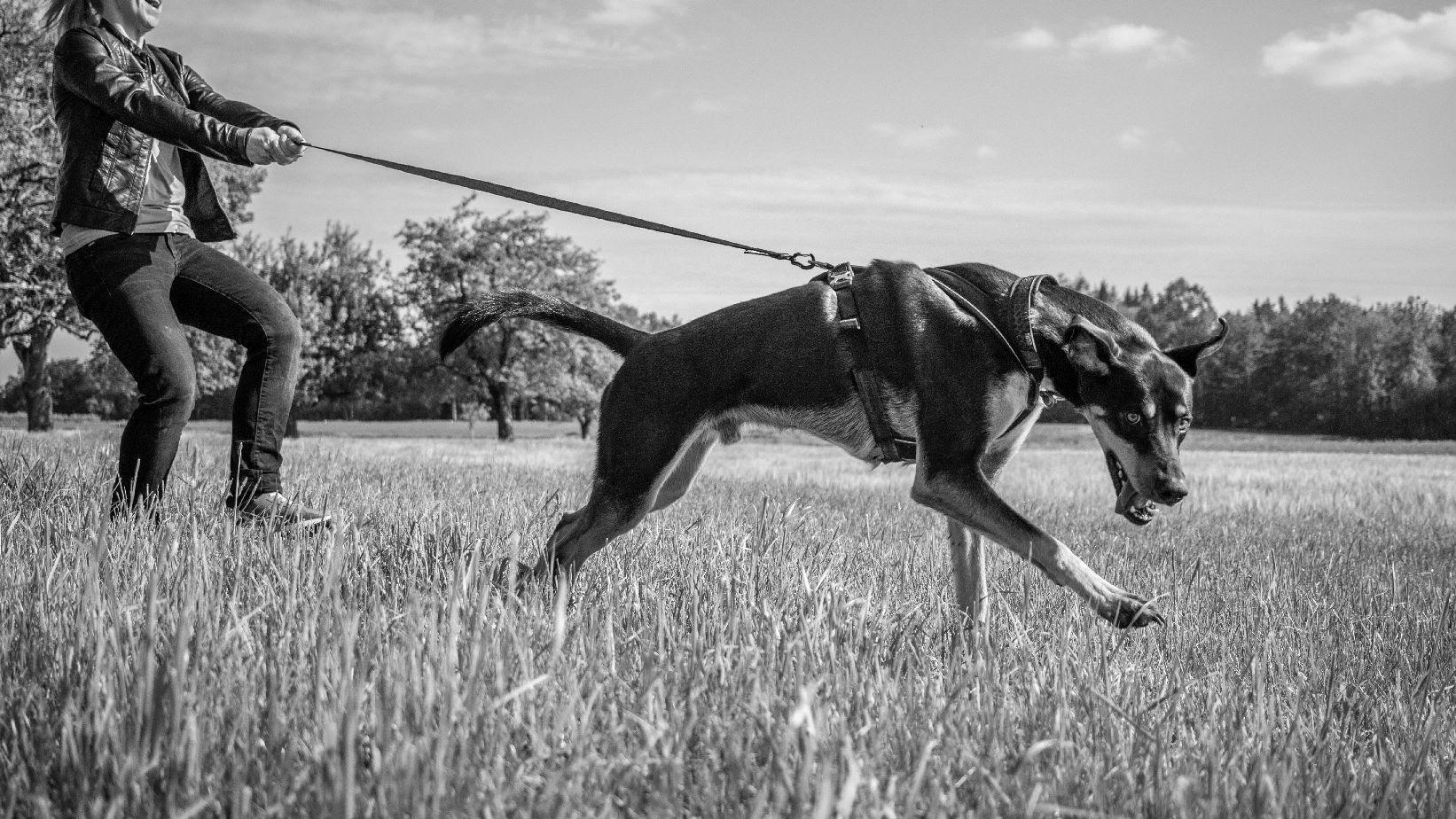 LakeDog Hundeschule Entspannt an der Leine
