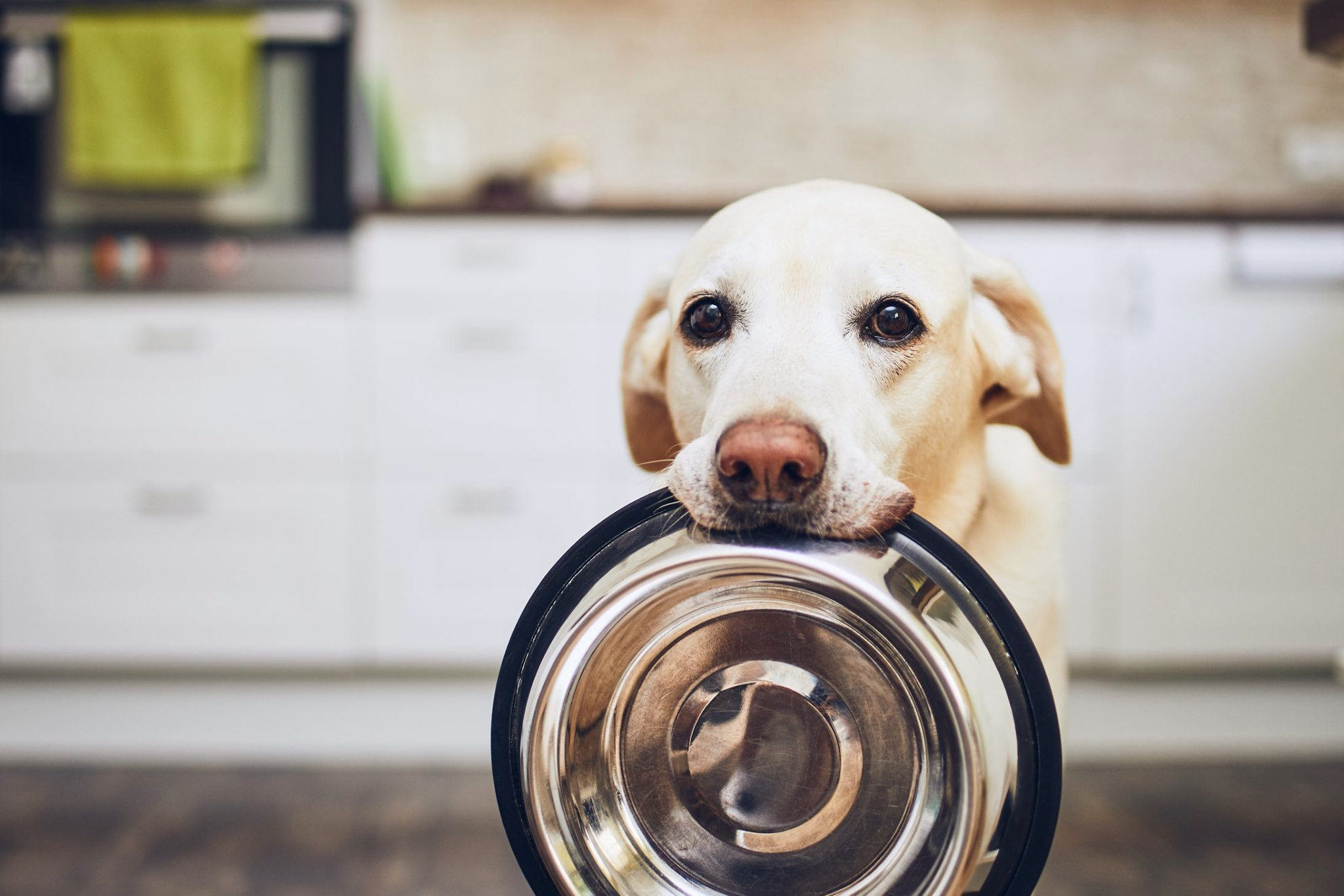 LakeDog Hundeschule - Ernährungsberatung
