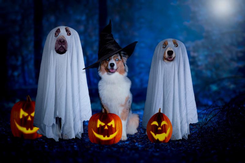 Halloween mit Hund - LakeDog Akademie