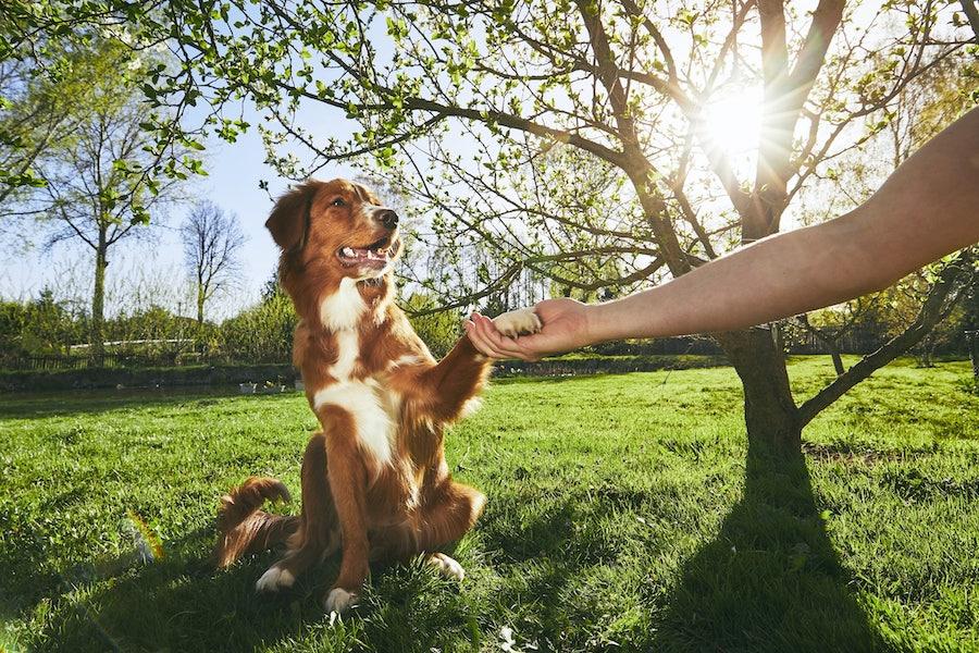 LakeDog Hundeschule Alltagstraining Hundeerziehung