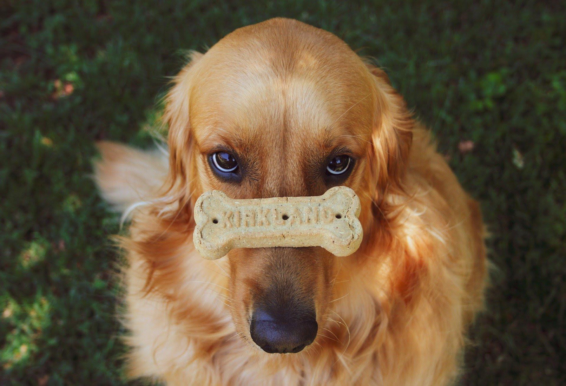 LakeDog Hundeschule Impulskontrolle