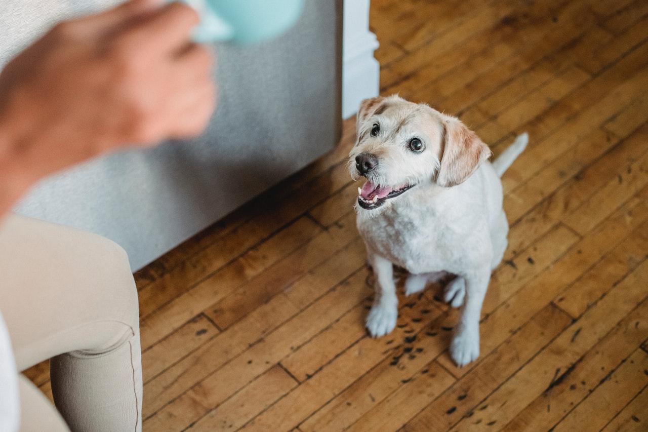 LakeDog Hundeschule Körpersprache & körperliches Training