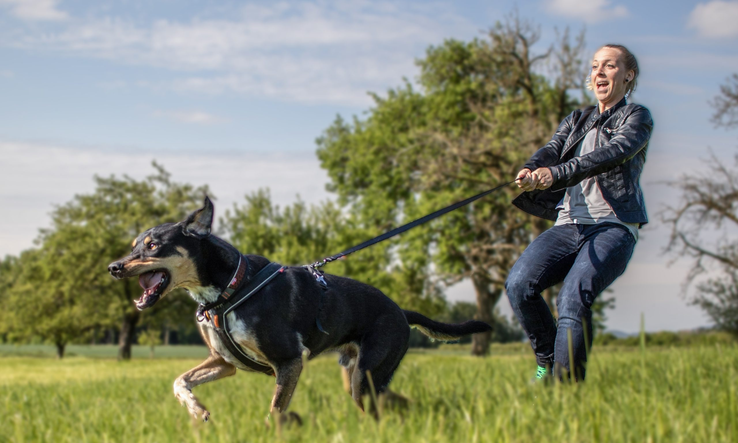 LakeDog Hundeschule Leinenführigkeit