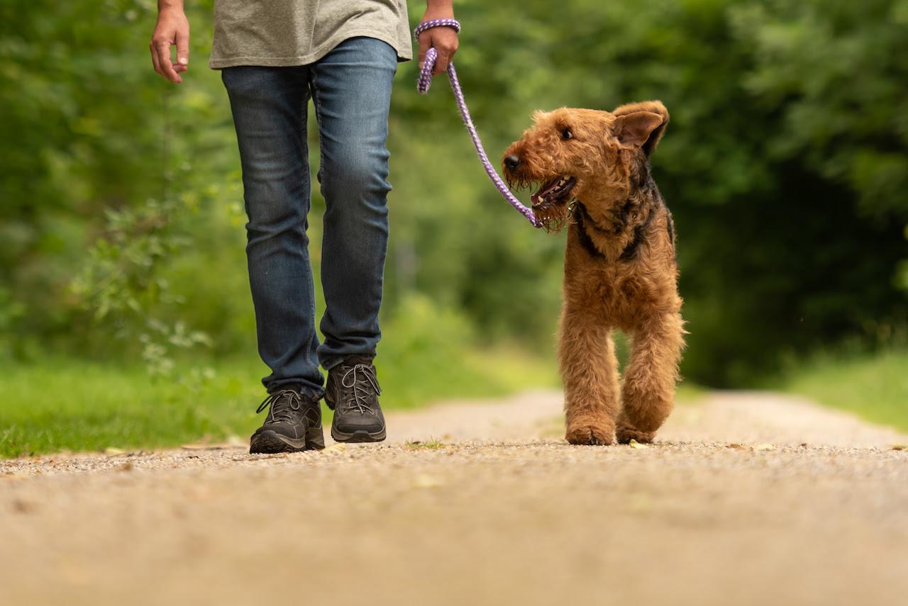 Lernspaziergang Social Walk LakeDog Hundeschule