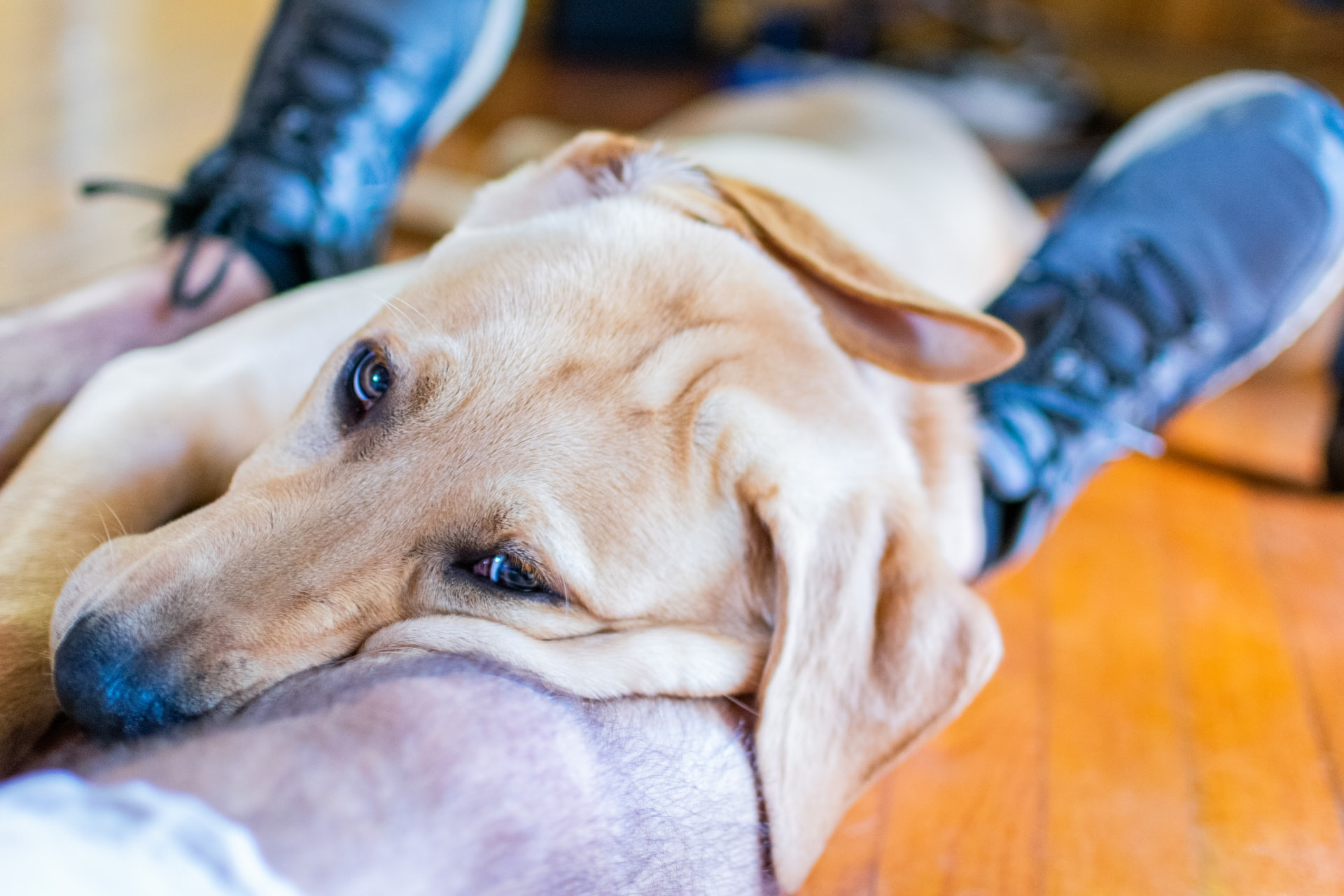LakeDog Hundeschule SlowDown Training