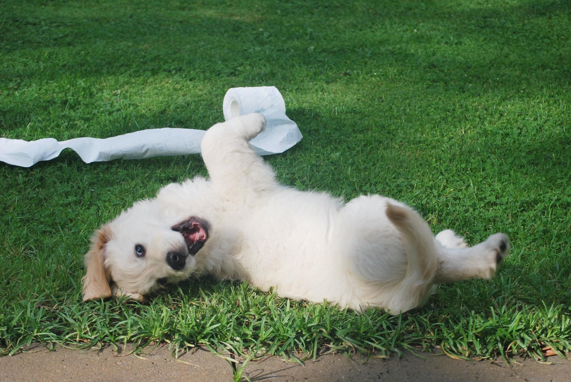 LakeDog Hundeschule- Welpen & Junghunde