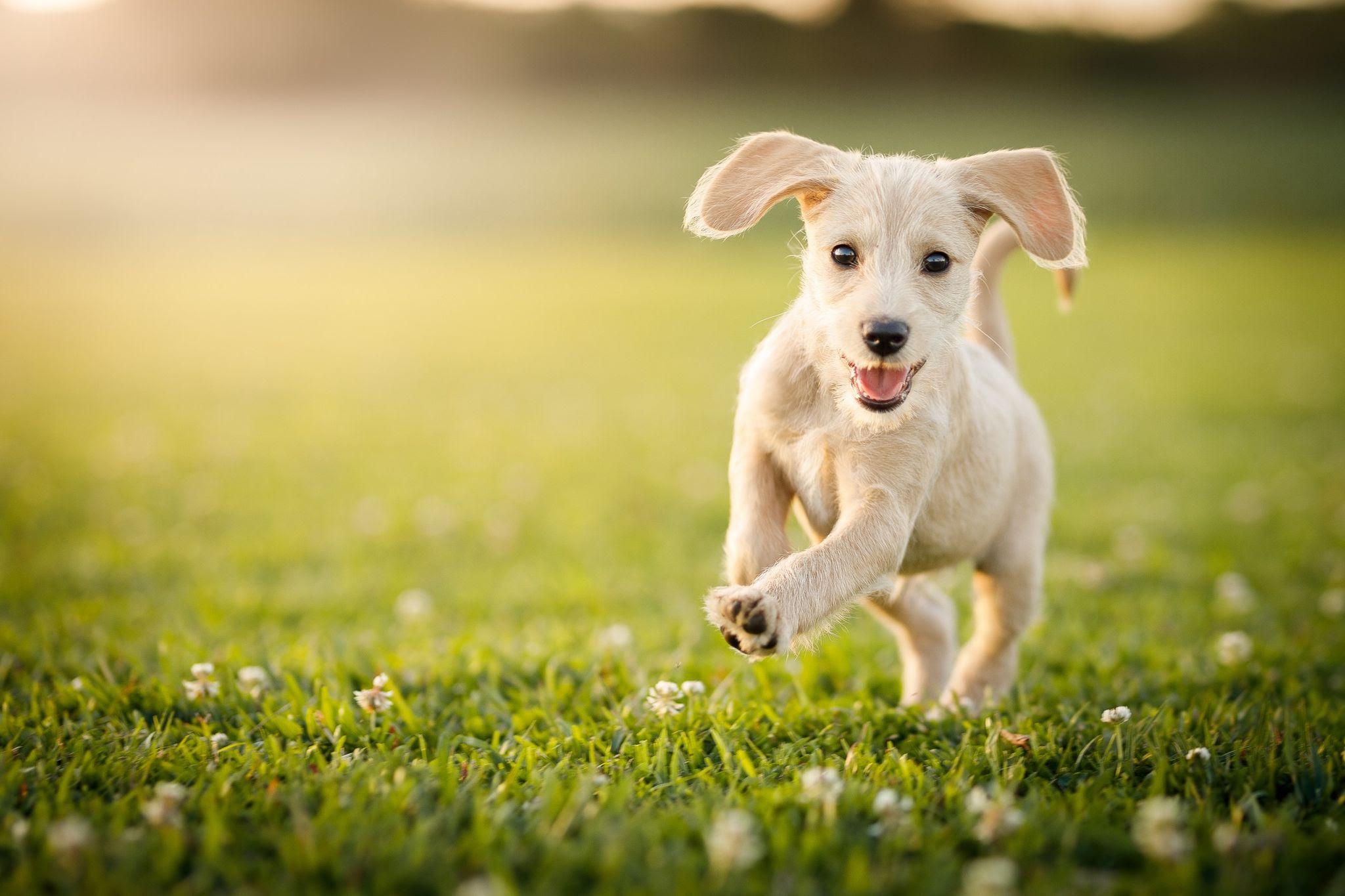 LakeDog Hundeschule Welpengruppe