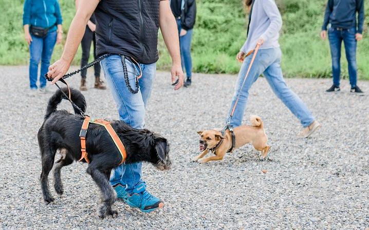 LakeDog Hundetraining Leinentraining