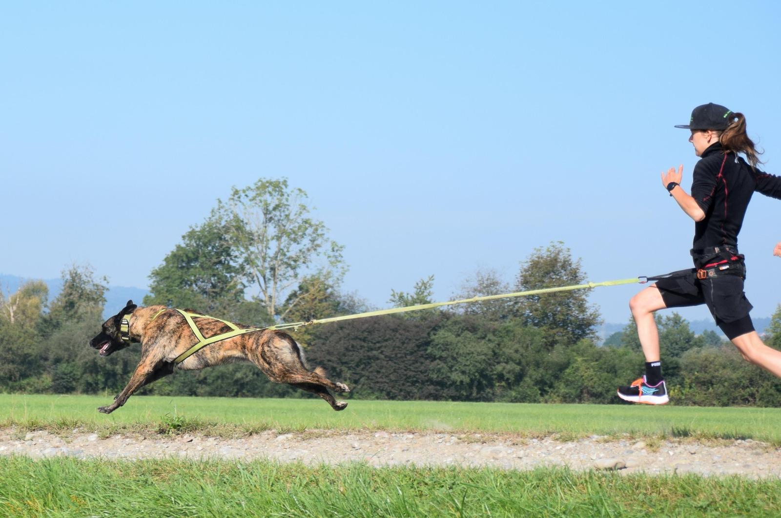 LakeDog Hundeschule Canicross Workshop