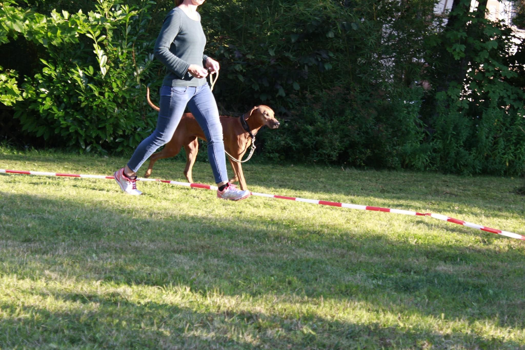 körpersprachliches Longieren - LakeDog Hundeschule Workshop
